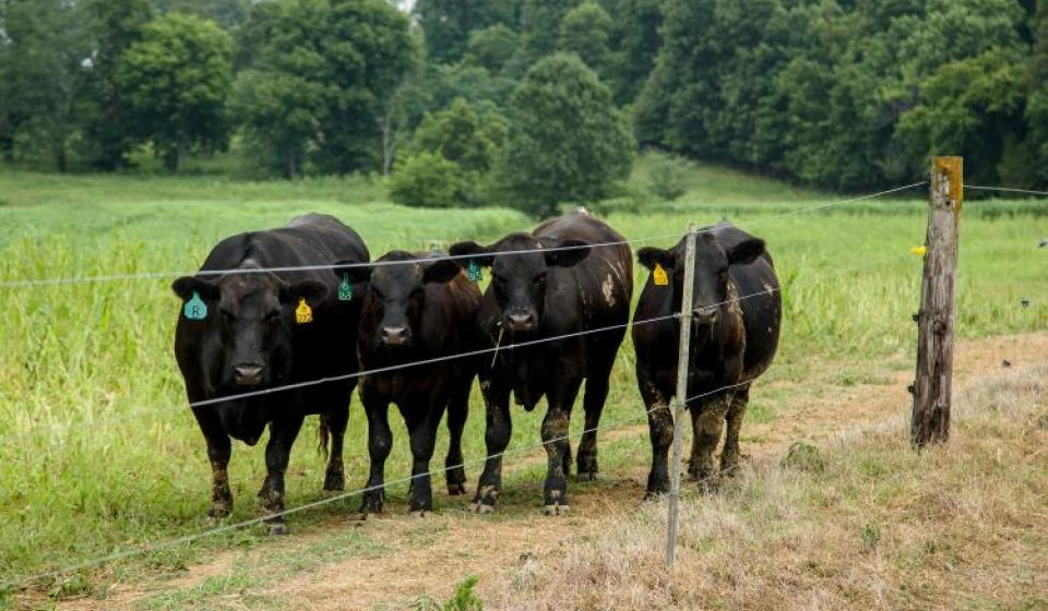 Beef Quality Assurance Certification is now available online. Click link above for more information.