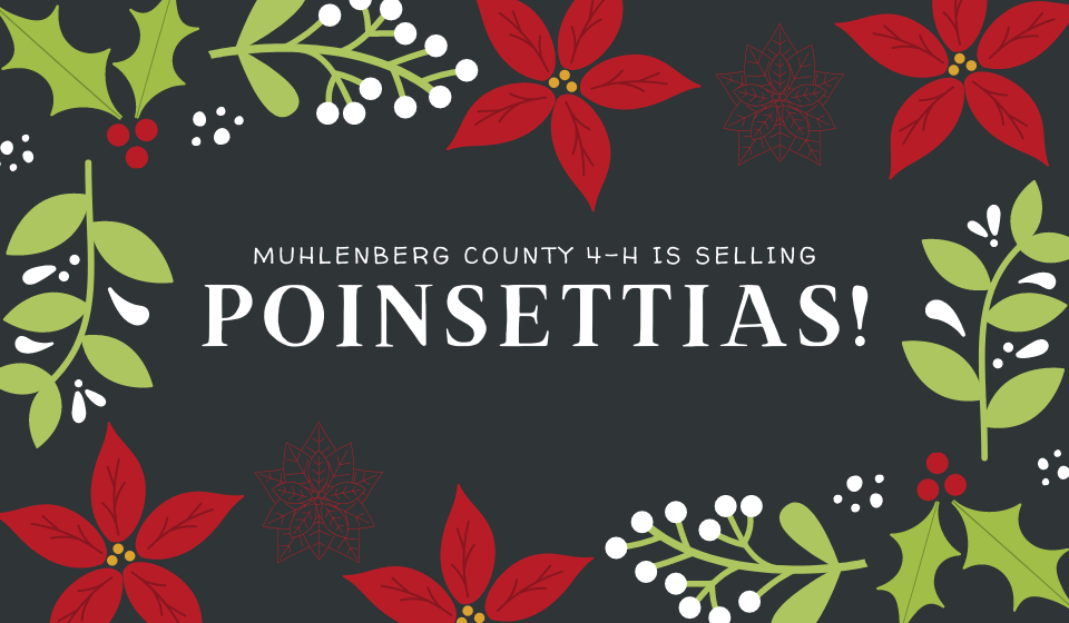 Muhlenberg County 4-H is selling poinsettias. Pick up will be December 5.